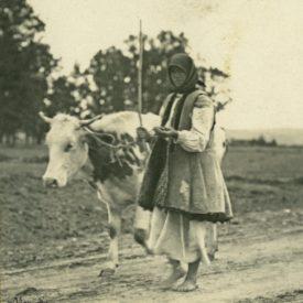 Țărancă plimbând vaca